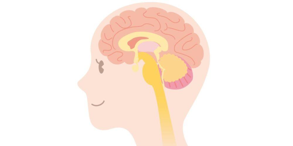 脳細胞は復活する