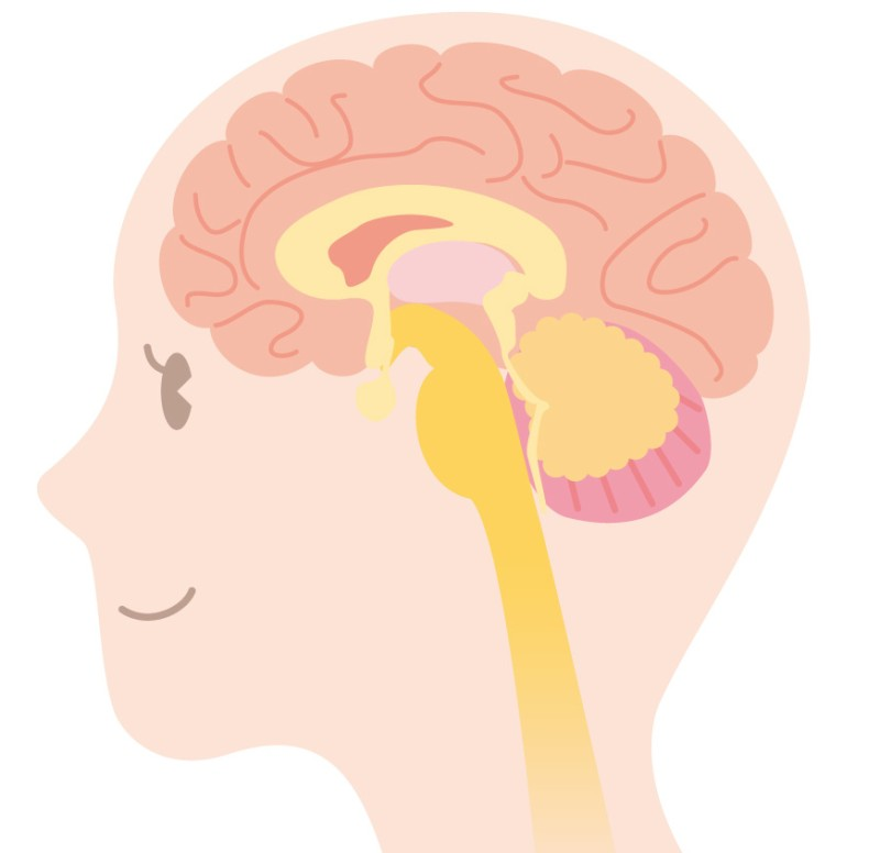 脳萎縮で死んだ脳細胞は復活する