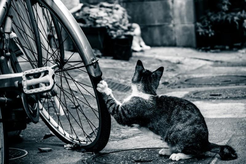 未成年が飲酒して自転車で帰る